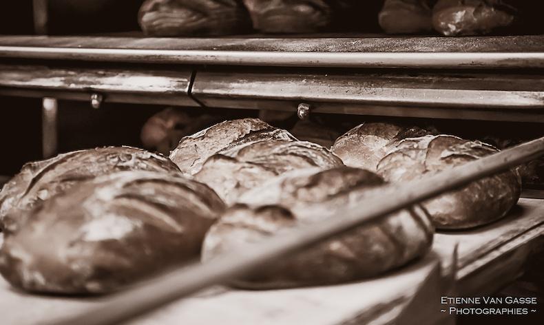 Agribio : du grain à la farine... aux pâtes!